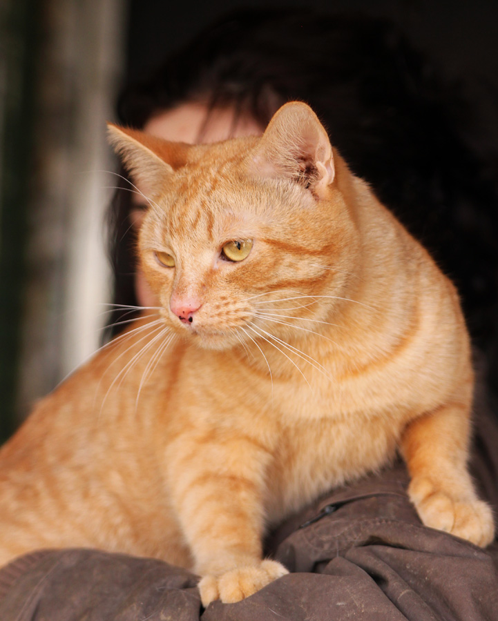 Кот из приюта дома