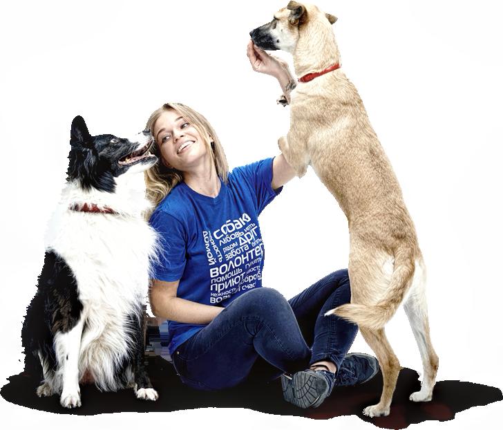 Стать волонтером приюта для бездомных животных